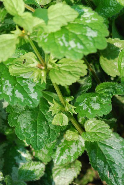 plantforww