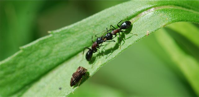 ant-for-blog-2