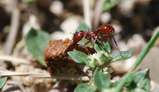 ant-carrying-dog-food-2