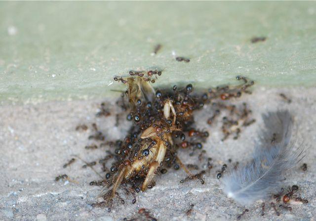 fire-ant-crew-1