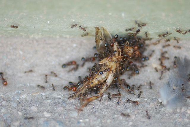 fire-ants-crew