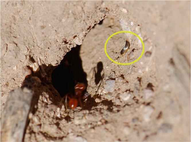 Pest Control Iowa City Bed Bugs