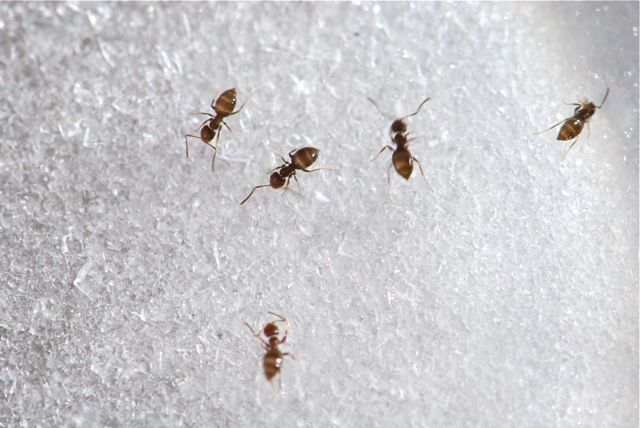 Our Homemade Happiness 21 Natural Ways to Get Rid of Ants