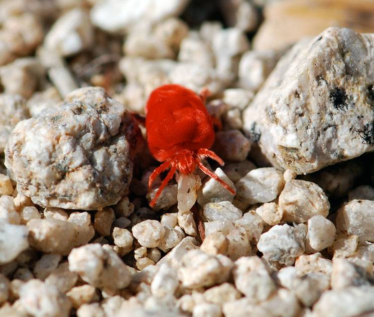 Bright Red Ants