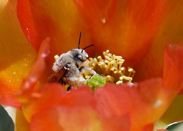 cactus-bee-c203