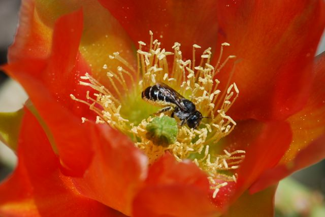 pollen-bee-2
