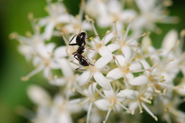 ant-visiting-dogwood-flower-good