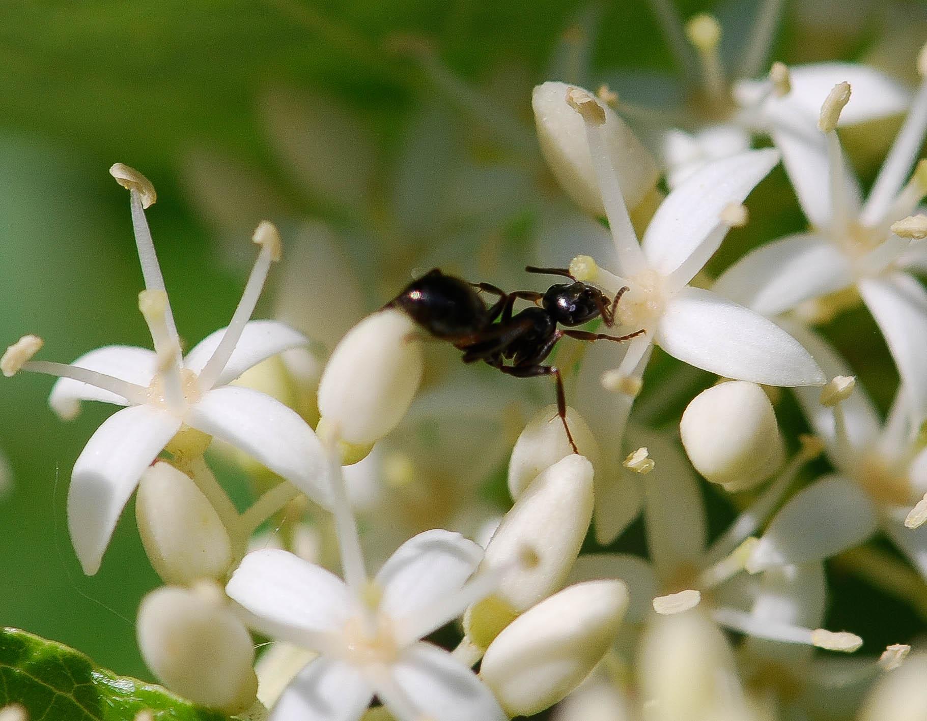 lightroom-ant-2