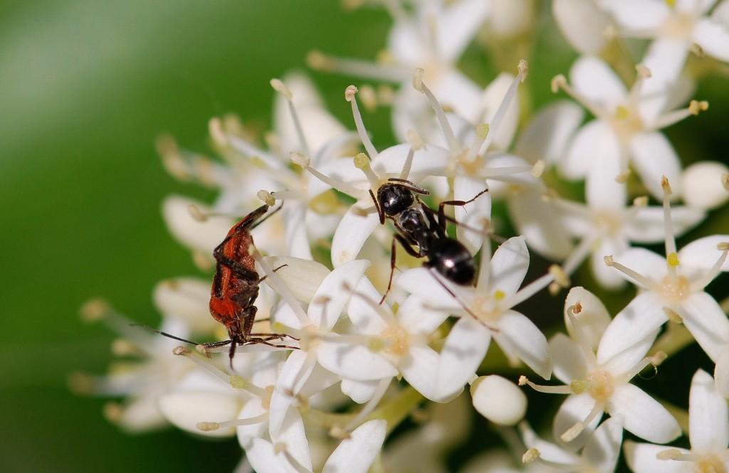 lightroom-ant-3