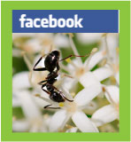 ants-FB-badge