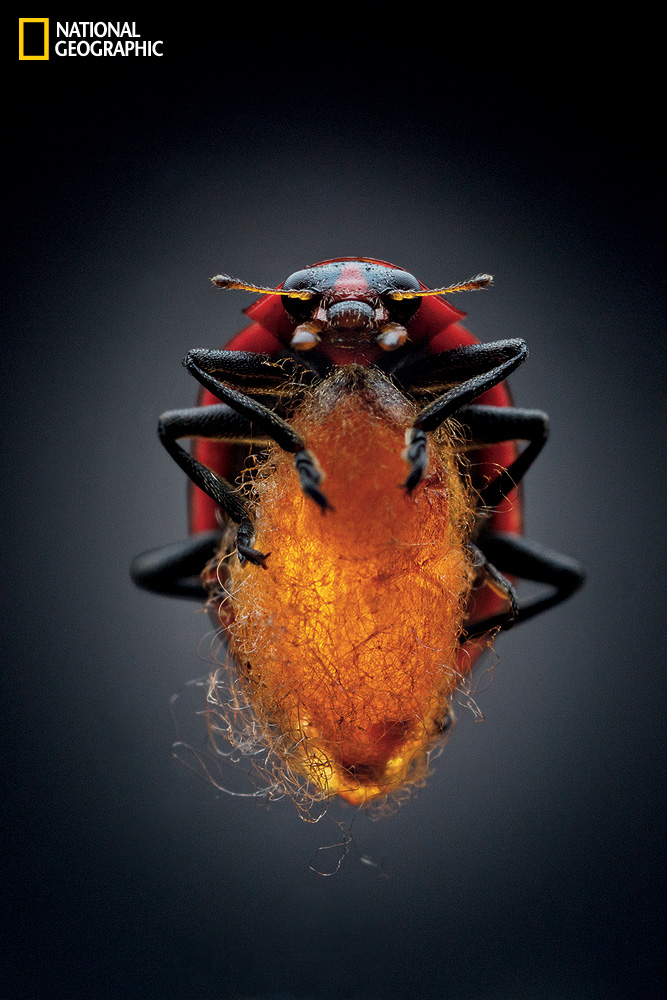 Arthropod Zombies: National Geographic Article In Time For ...
