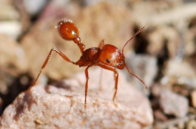 ant-1111