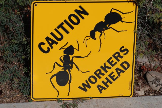 workers-ahead-sign_0251